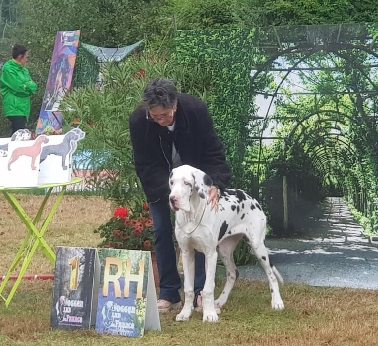 Read more about the article Nationale d'Elevage Doggen Club France NEUVIC 2021